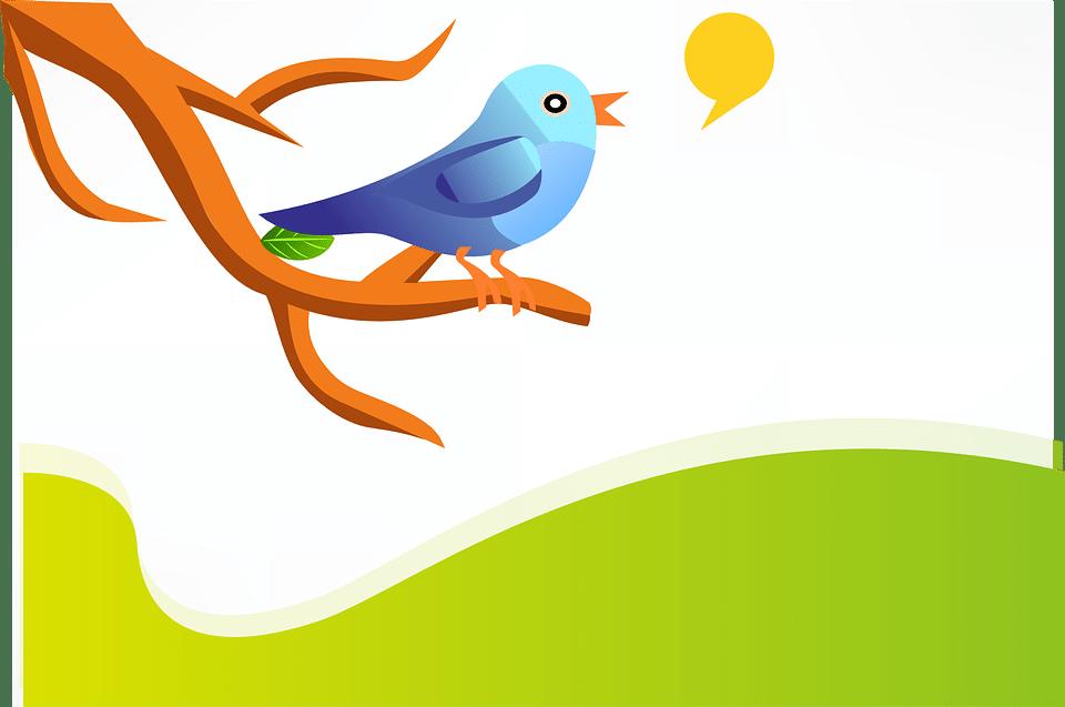Kako do sledilcev na omrežju Twitter?